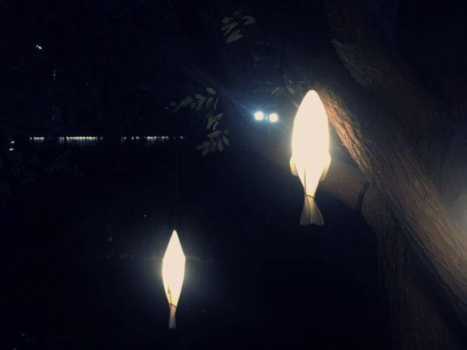 暗闇の中に光る2尾の魚