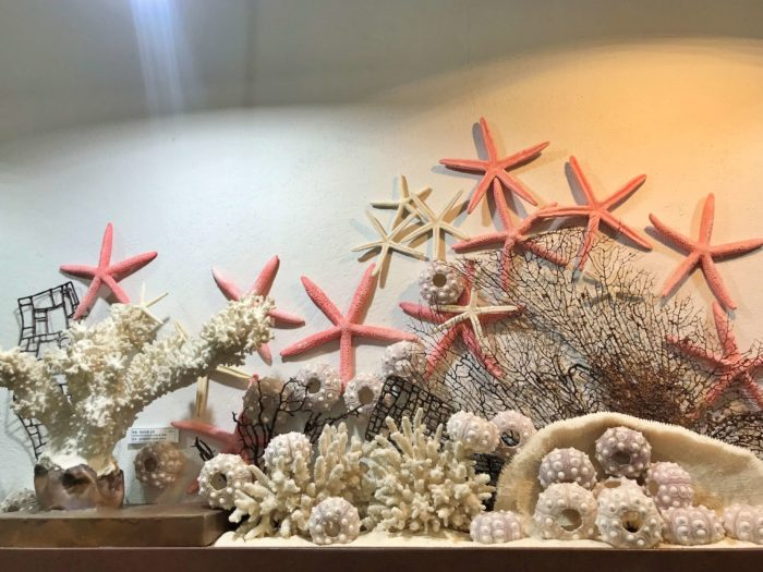 貝殻で海藻風