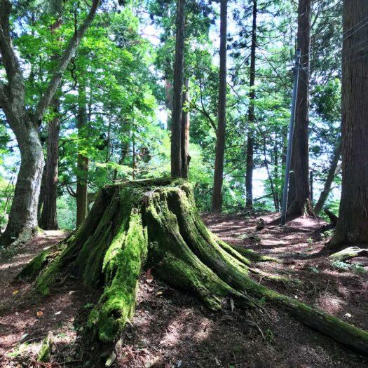 苔で覆われた大きな切株