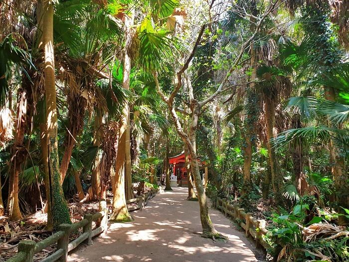 亜熱帯ジャングル風の小道