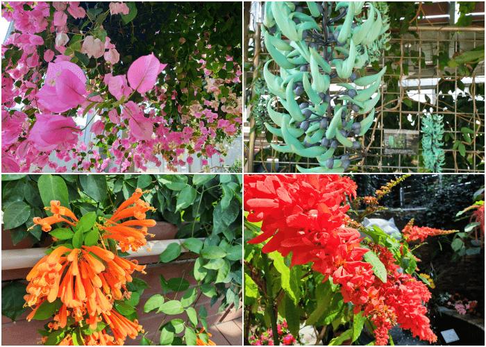 目を引くカラフルな花々