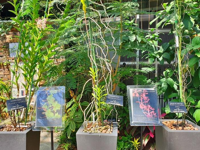 高く伸びた植物より名前札がおもしろい
