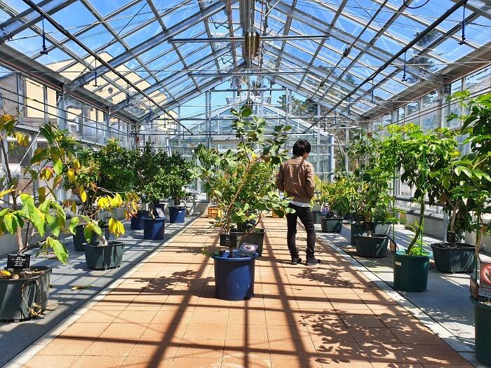 自然光の差し込む明るい温室