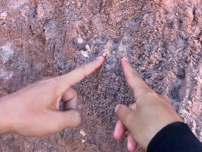 岩に埋まった無数の白い結晶