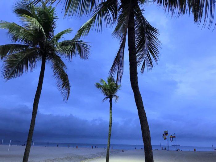 コパカバーナビーチのヤシの木