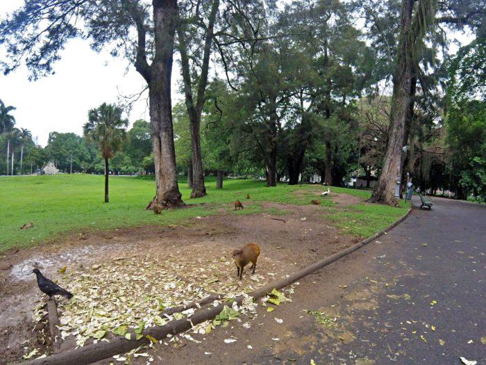 公園のハトとおさるさん