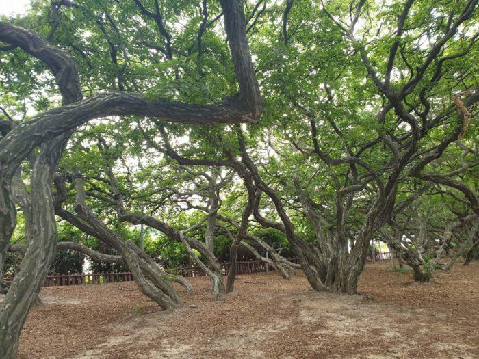 地面から枝分かれする木