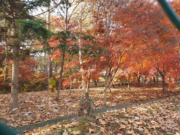 フェンス越しの紅葉