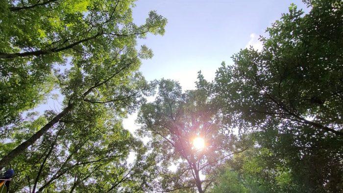 青い空と太陽と高く伸びた木