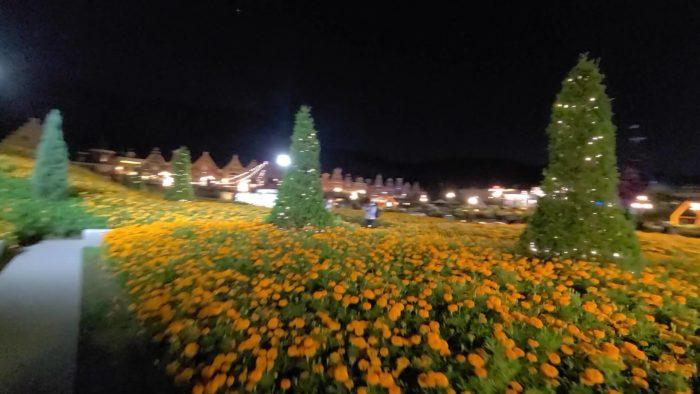 黄色いガーベラ(?)