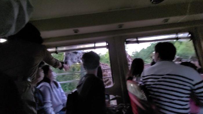 窓から直接エサやり2