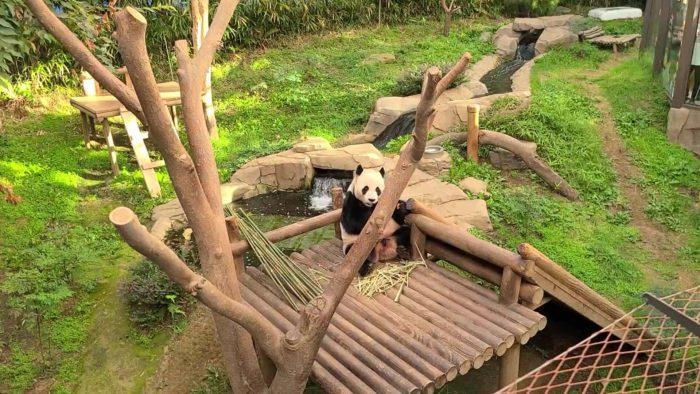 グダーって座るパンダ