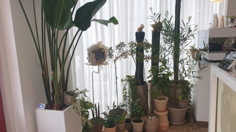 注文カウンター横の観葉植物たち