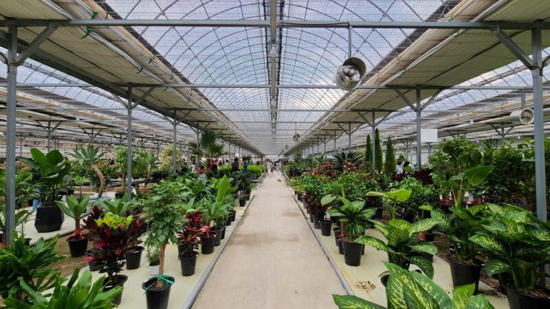 ドンタン 2000坪の観葉植物アウトレット