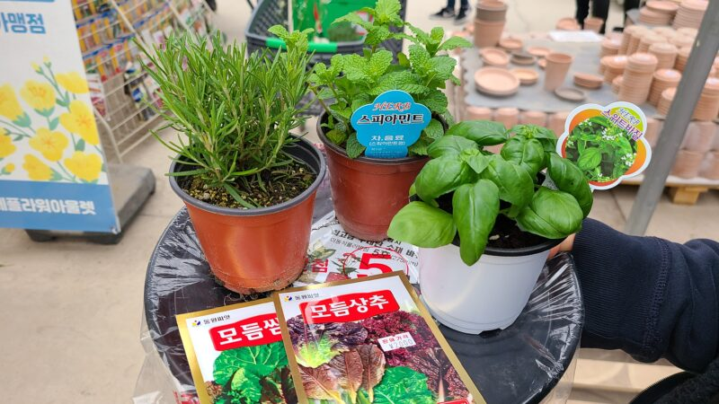 ドンタン 観葉植物アウトレット 購入品