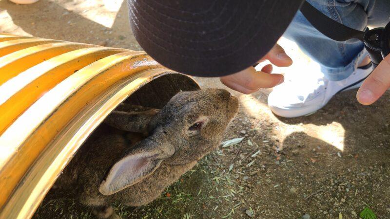 안성팜랜드 ウサギさん