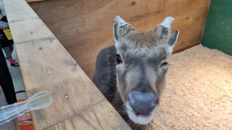 ウインクする鹿さん